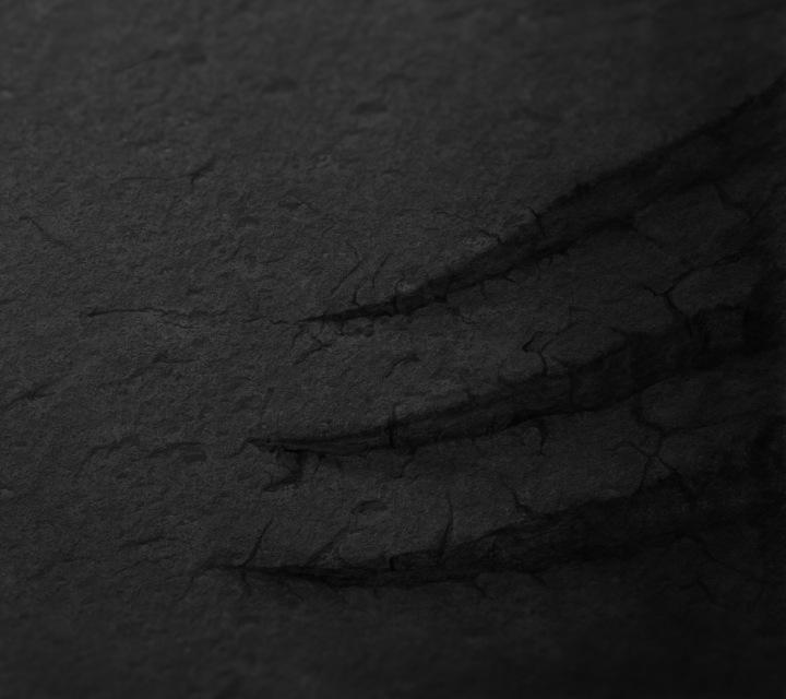 nexus2cee_wallpapers_15